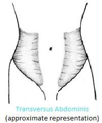 smaller waist